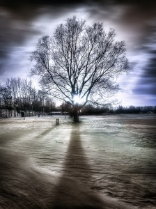 tree-surreal