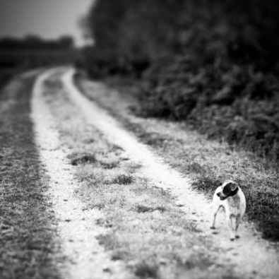 Stray Dog in the Countryside Black and White