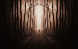 surreal-dark-forest-man-walking-fog-red-37184321