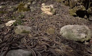 outdoorhub-video-hiker-stumbles-snake-pit-2015-05-18_19-48-38
