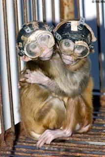 monkeyWENN1