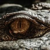 saurian-eye